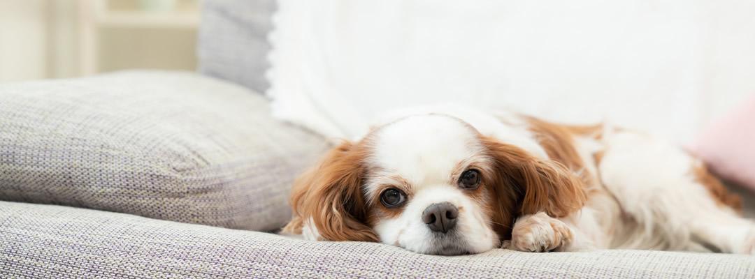 犬の診察・手術