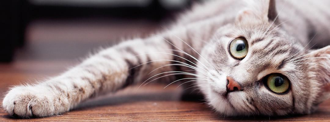 猫の診察・手術