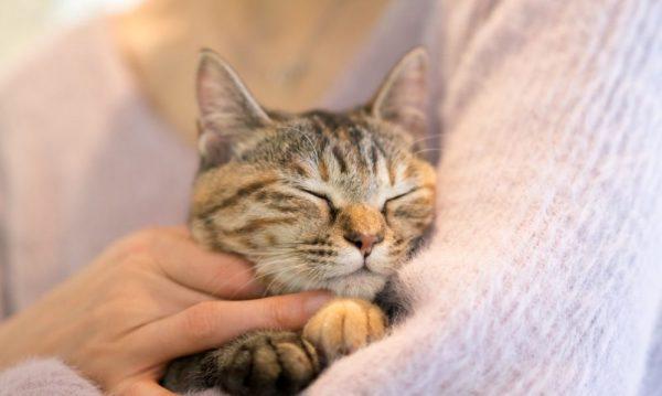 怯える猫への対処法とは?原因についても解説しますサムネイル
